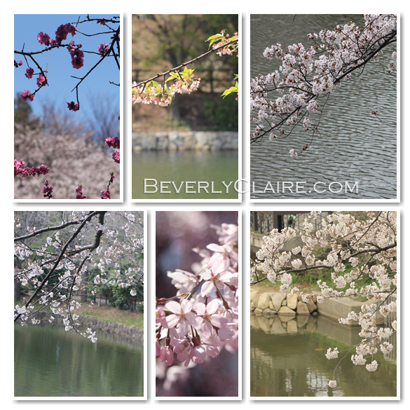 Sakura and Pond Images by Beverly Claire Photography